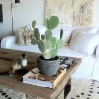 cactus en interior