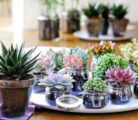 suculentas y cactus varios