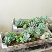 suculentas y cactus